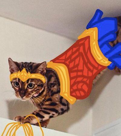 Conta do Instagram transforma felinos em super-heróis e muitas outras coisas