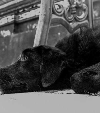 Especial protetores: quem são os heróis anônimos que cuidam dos animais em situação de abandono
