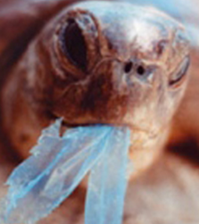 Quênia proíbe sacolas plásticas e morte de animais marinhos sufocados cai 67%