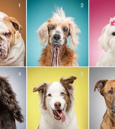 Ela fotografou os 'bens' de diversos cães para entender que tipo de vida eles levam