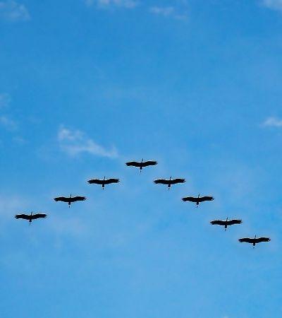 Estudo pioneiro revela de que maneira os pássaros veem o campo magnético da Terra
