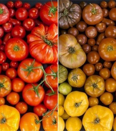 Como é o mundo visto por pessoas que enxergam as cores de forma diferente