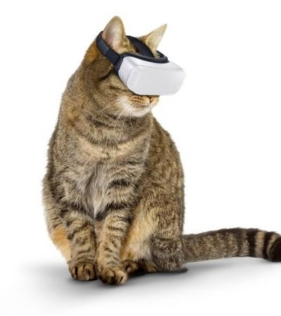Inventaram um óculos de realidade virtual para gatos por um ótimo motivo