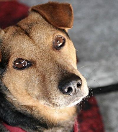 Criadouros ilegais fazem cadelas cruzarem 5 vezes mais que o normal