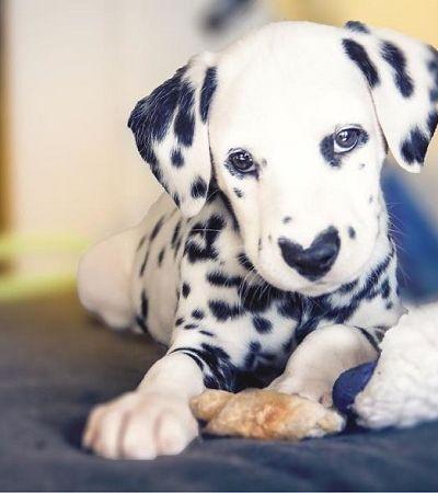 Este cãozinho está ganhando corações pela internet e o motivo 'está na cara'
