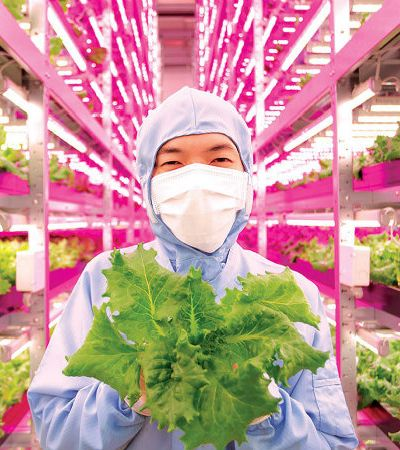 Fazendas urbanas: como a tecnologia pode colocar alimentos orgânicos baratos no seu prato