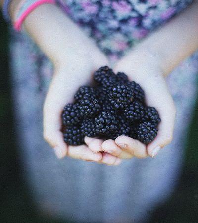 Pigmento do açaí e da uva pode inibir crescimento de câncer