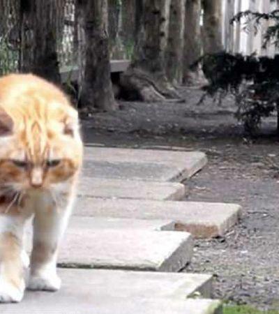 Como o óleo de cannabis salvou a vida deste gatinho