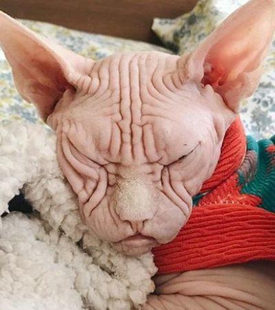 Fofo ou assustador? O gato mais bravo do mundo está dividindo a internet