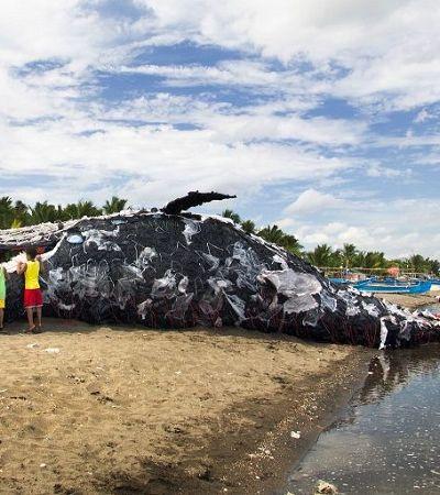 Cachalote é encontrado morto com 29 quilos de plástico no estômago