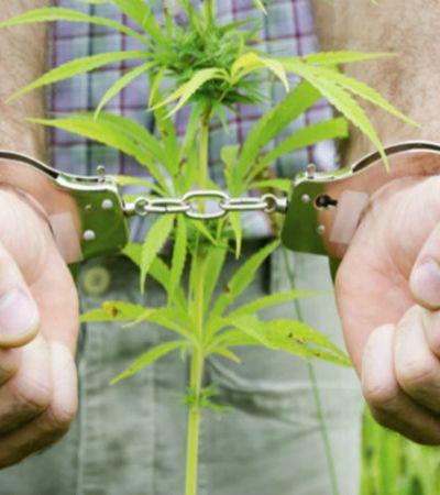 9 consequências alarmantes que a legalização da maconha no Brasil pode trazer