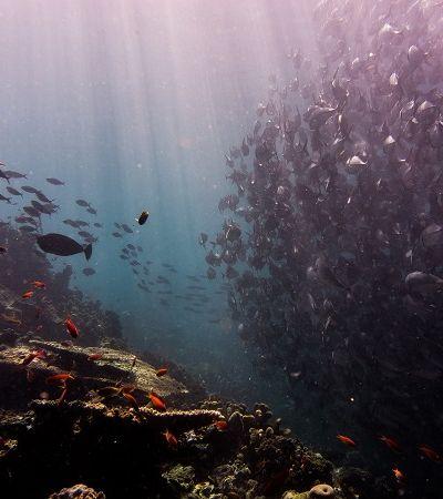 Leis de controle já reduziram plástico no oceano, diz relatório