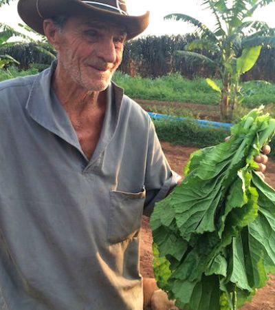 Fomos visitar uma fazenda de alimentos orgânicos no interior de SP