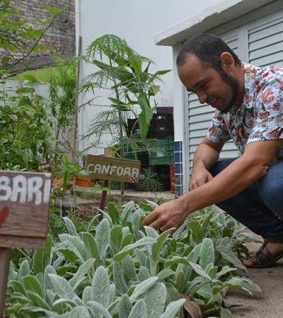 26 unidades de saúde têm hortas medicinais em Florianópolis