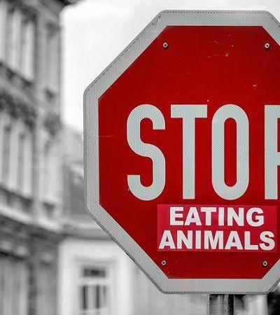 70% da população mundial está repensando a carne e veganismo cresceu 600% nos EUA, segundo a Forbes