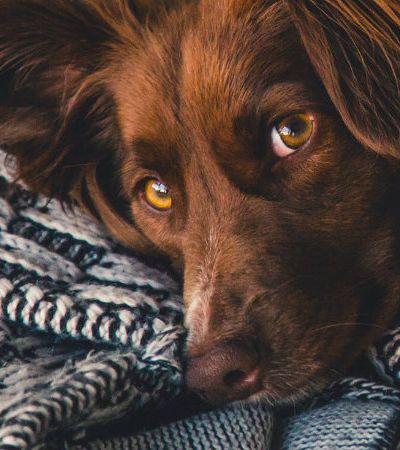 Vira-latas: porque eles são os cachorros do momento