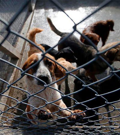 Presídios de Tremembé ganharão canis. Detento que cuidar de cães e gatos terá pena reduzida