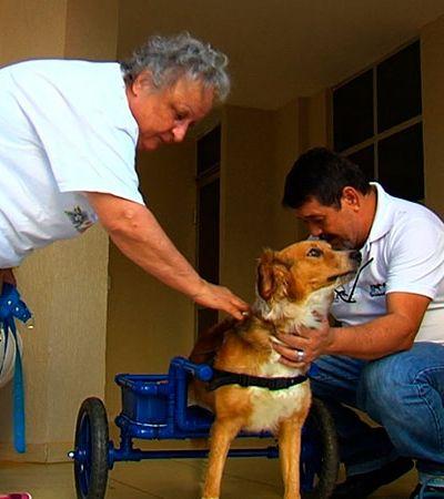 Ele cria cadeiras de rodas de graça para animaizinhos com deficiência
