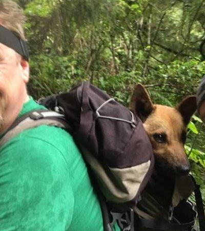 Eles caminharam 12 horas para salvar um cachorro que se feriu em uma armadilha