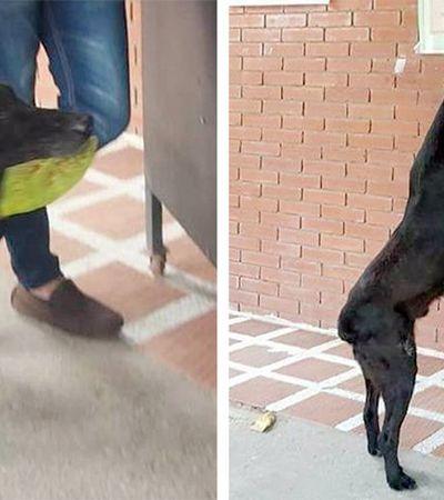 Cão entrega folhas como se fosse dinheiro para 'comprar' comida na cantina