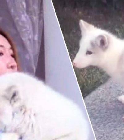Ela achou que tinha adotado um cachorro… Meses depois, descobriu que não