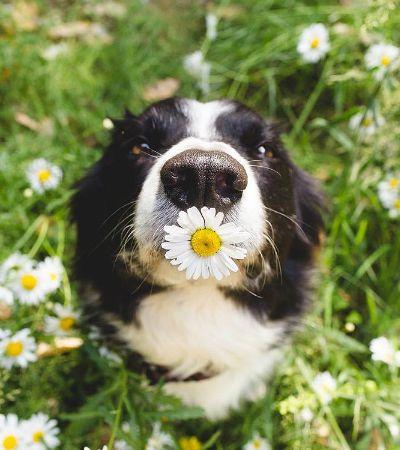Impossível parar de ver as viciantes fotos da cadela Momo