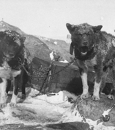 21 fotos da Antártida clicadas em 1911 e que estavam esquecidas