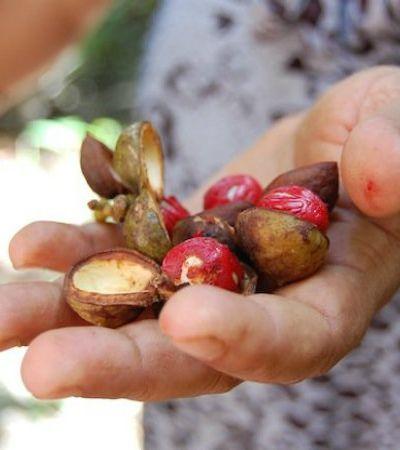 Fomos conhecer uma fábrica de sabonetes sustentável em plena Amazônia