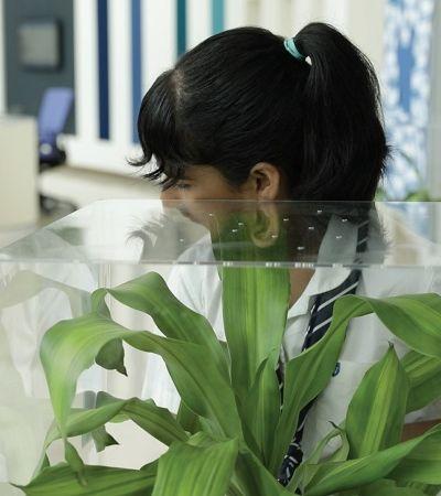 Experimento com plantas mostra que o bullying afeta qualquer um