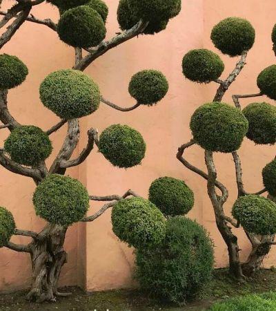 As árvores de São Francisco são (quase) esculturas naturais