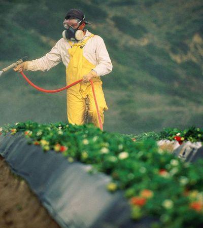 Jardineiro californiano com câncer terminal será a primeira pessoa a levar a Monsanto ao tribunal