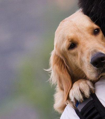 Por que perder um animal pode ser mais doloroso que morte de pessoas queridas