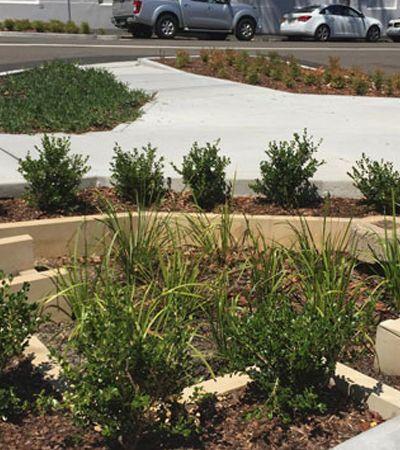Na Austrália, 'jardins de chuva' ajudam a reduzir poluição nas águas da cidade