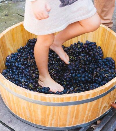 Festival de vinho espera receber 10 mil pessoas em fim de semana no Rio