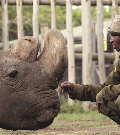 Quênia considera criar pena de morte para caçadores