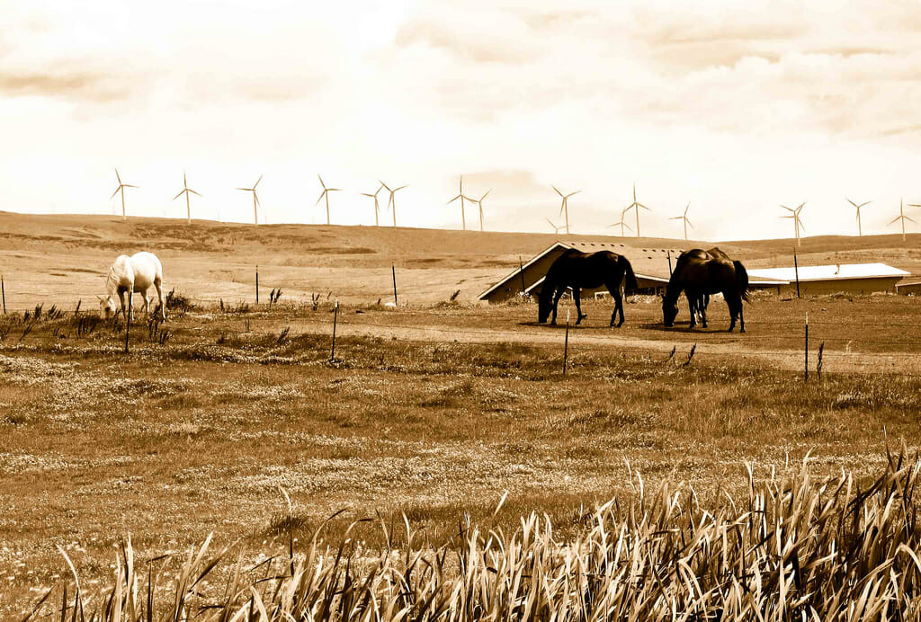 Nem a produção de gado mais sustentável pode ajudar o planeta