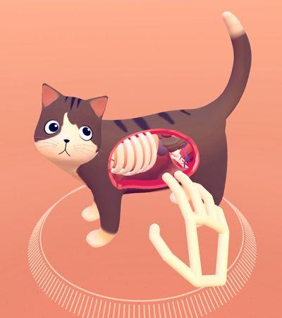 Este app de realidade virtual permite que você veja um gato por dentro