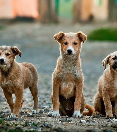 Em decisão histórica Justiça veta consumo de carne de cachorro na Coreia do Sul