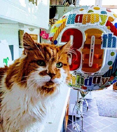 Ela adotou um gato em 1988 e não esperava celebrar seu aniversário 30 anos depois