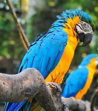 Com reforma Zoológico do Rio vira parque biológico e promete integração entre animais e público