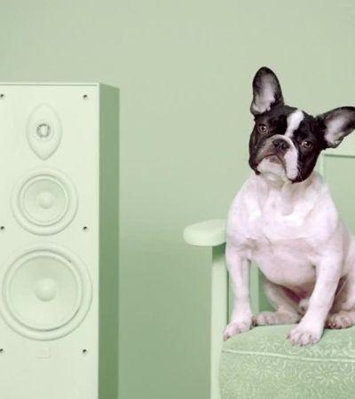 Spotify entra na adoção de cães após descobrir que eles curtem diferentes estilos de música