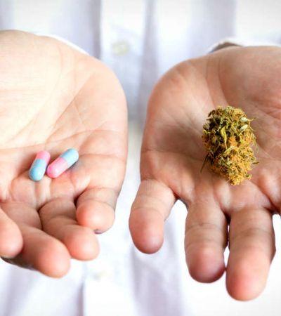 Novo estudo diz que maconha medicinal não funciona no combate às dores crônicas