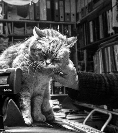 Catisfaction #2: delicie-se com essas fotos de gatíneos ronronantes