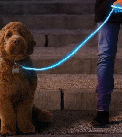 Esta coleira de LED é perfeita para passeios noturnos com seus cachorros