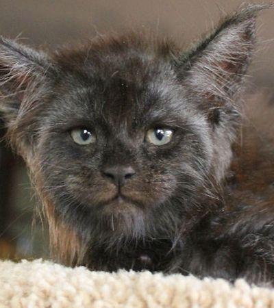 Filhote de gato 'com rosto de humano' viraliza na internet