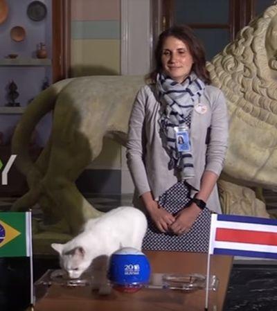 Revelados erros e acertos na primeira fase da Copa de Achilles, o 'gato vidente'