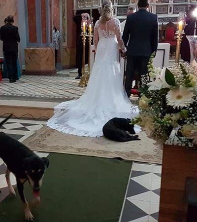 Noiva que teve casamento invadido por cão que deitou em vestido vê história se repetir