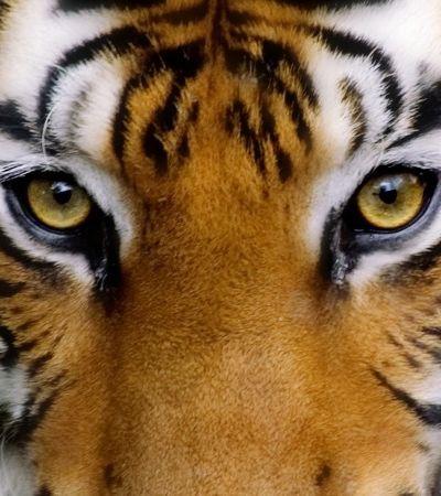 O animal que você vê primeiro nesta imagem diz muito sobre a sua personalidade