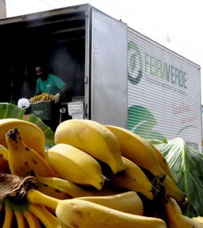 Moradores de Ponta Grossa podem trocar recicláveis por verduras e frutas frescas