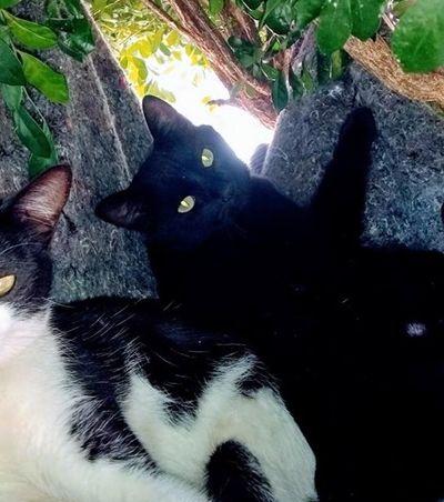 Conversamos com a autora de uma 'casa na árvore' maravilhosa para gatos de rua